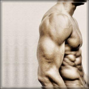 ガリガリ 筋肉